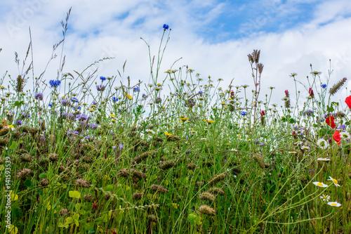 Foto op Plexiglas Weide, Moeras Beautiful flowering Spring Meadow