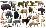 Fototapeta Zwierzęta - Birds, mammal and other animals of Africa isolated