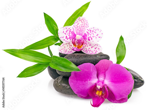 Akustikstoff - Wellness: Orchids, stones and bamboo :)