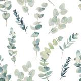 Akwarela eukaliptusa oddziałów wzór. Ręcznie malowane kwiatowy tekstury z obiektów roślin na białym tle. Naturalna tapeta - 141598152