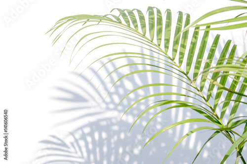 Poster  palm leaves and shadows on a white wall background