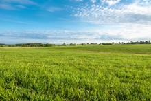 Grass Field, Green Spring Landscape