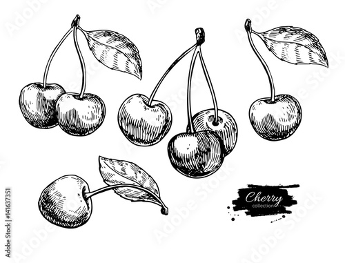 Valokuva Cherry vector drawing set