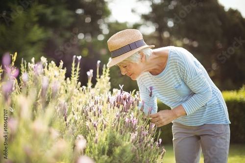 Fotografía Senior woman smelling flowers