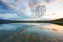 Silhouettes Of Flying Flock Birds (in Shape Of Heart) Against Clouds