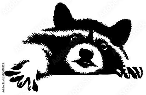 szop-pracz-rysunek-czarno-bialy