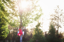 Rear View Of Girl Climbing On Tree At Park