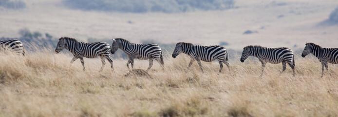Fototapeta na wymiar Kenya, Africa