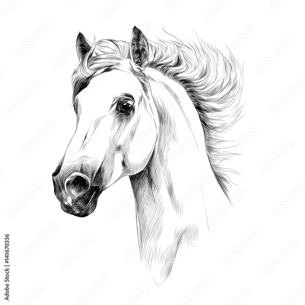 Fototapety, obrazy: horse head profile sketch vector graphics