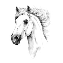 Horse Head Profile Sketch Vect...