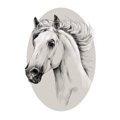 horse head profile sketch vector chart with the grey oval circle