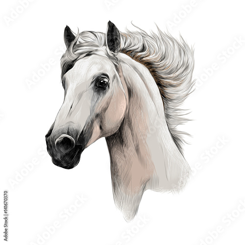 Photo  the white horse head profile sketch vector chart color picture