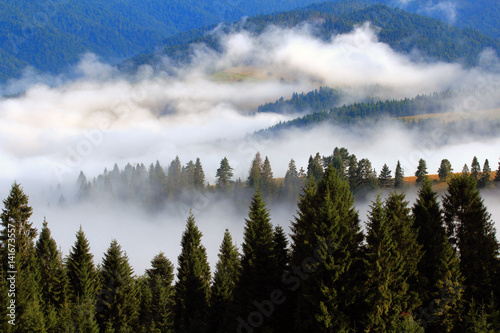 Poster Morning with fog Wiosenne Mgliste Pieniny