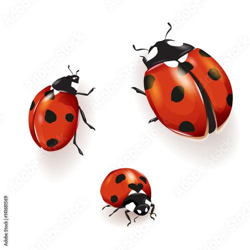Photo  Ladybird illustration