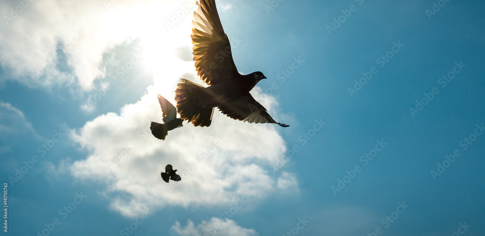 Pigeons in the sky against the sun