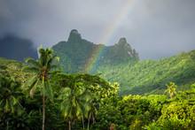 Rainbow On Moorea Island Jungl...