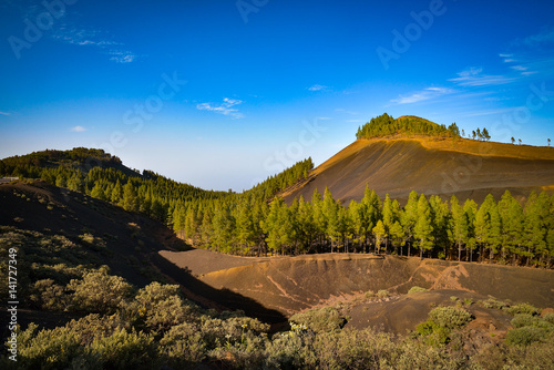Tuinposter Canarische Eilanden Mountain landscape with volcanic soil and pine trees in Gran Canaria island, Spain