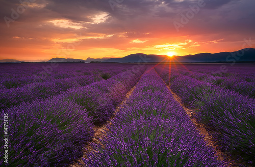 Canvas Prints Lavender Lavender sunrise