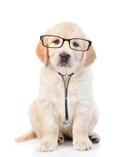 Golden Retriever With A Glasse...