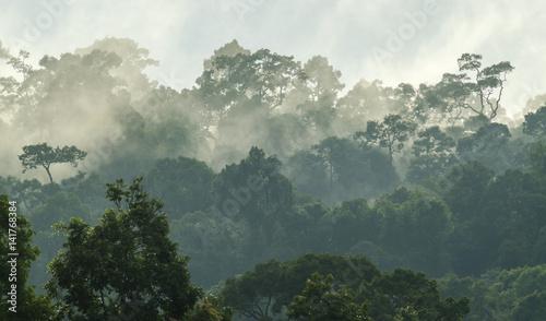 gleboki-las-tropikalny-drzewo-z-baldachimem-i-mgla