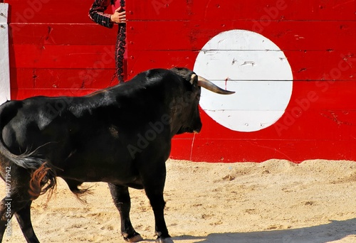 Foto op Canvas Stierenvechten corrida 1