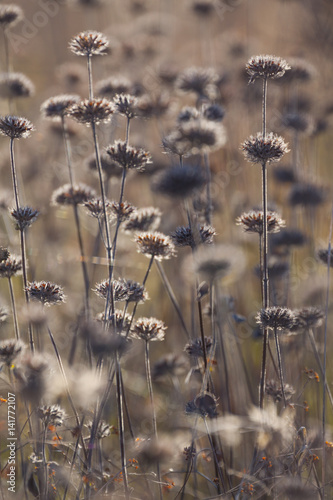 Autumn. Flowers in the field