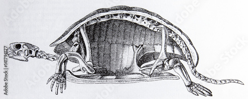 Tortoise Skeleton Canvas Print