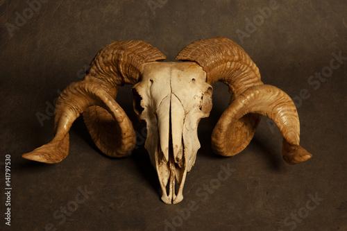 Goat skull Poster