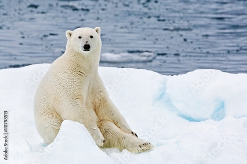 A polar bear sitting on a floating iceberg in the Arctic Ocean