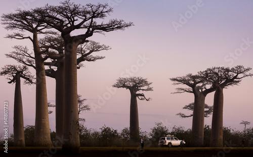 In de dag Baobab Madagascar, Africa, Land of the Baobab trees