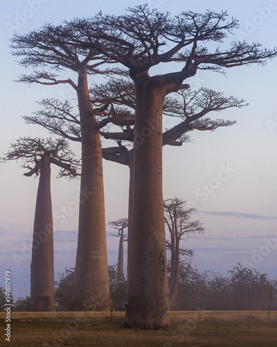 Madagascar, Africa, Land of the Baobab trees