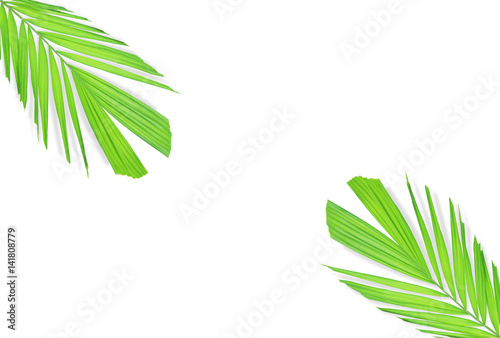 Poster Vegetal Palm leaf isolated on white background