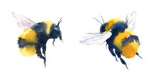 Watercolor Bumblebees In Fligh...