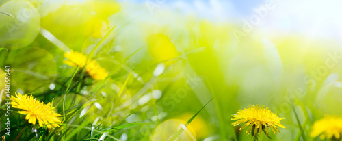 Foto op Aluminium Geel art abstract floral spring or summer background with fresh grass and spring flower