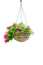 Pink Flower Pot Hanging Isolat...