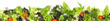 canvas print picture - Salat - Panorama