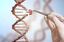 Genetic Engineering And Gene M...