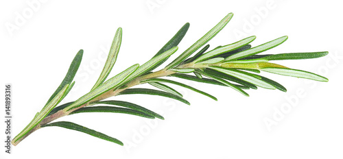 fresh rosemary isolated in closeup Fototapet