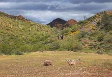 Riders On Horses In The Desert Southwest, Arizona, USA, Horizontal
