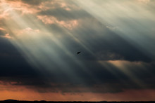 A Bird Flying In The Middle Of Some Big Sunrays, Near Sunset, With Dark Clouds In The Background, An Orange Sky, And A Lake Below
