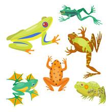 Frog Cartoon Tropical Animal C...