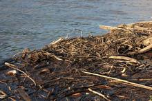 Wood Debris Floating In Water