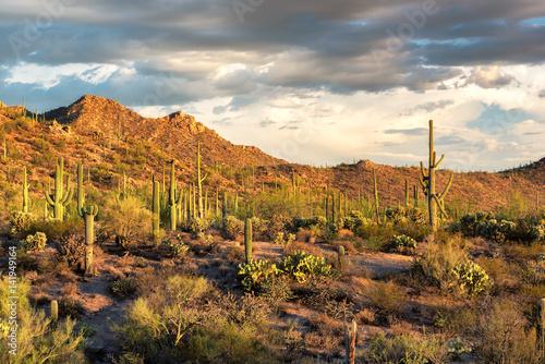 Staande foto Droogte Saguaro cactus landscape in Saguaro National Park, Arizona.