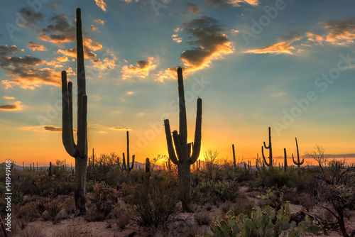 Canvas Prints Arizona Arizona Saguaro cactus at beautiful sunset.