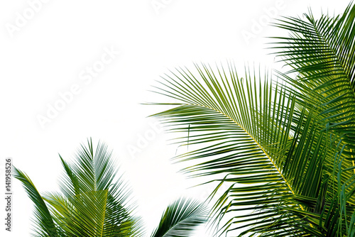 Foto auf AluDibond Palms Closeup leaves of coconut tree isolated on white background