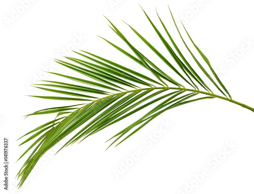 Green palm branch Wall mural