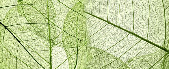 Fototapetagreen leaf texture