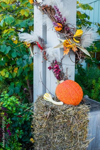 Garden Poster Roe Pumpkin display for Halloween