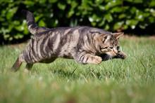 Katze Im Sprung