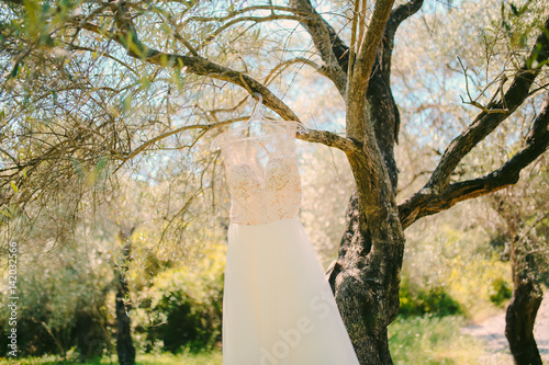 Tuinposter Olijfboom The bride's dress hangs on a hanger on an olive tree. Collecting brides in an olive grove in Montenegro. Wedding in Europe.